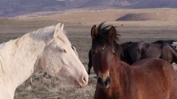 Up close view of two wild horses standing nose to nose.