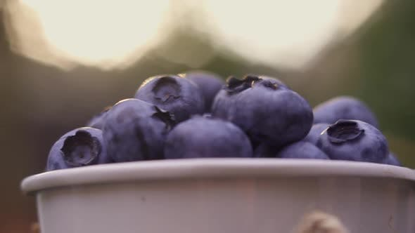 Camera Slowly Flies Around a Small Decorative Bucket with Blueberries on Wooden Bench in the Garden