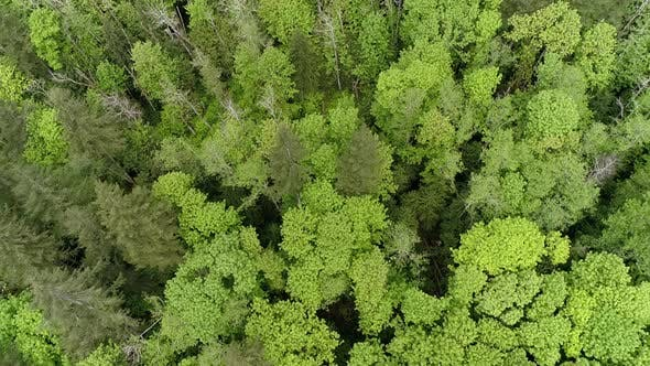 Thumbnail for Drone Panning Up Over Bright Forest Canopy With Vibrant Green Color