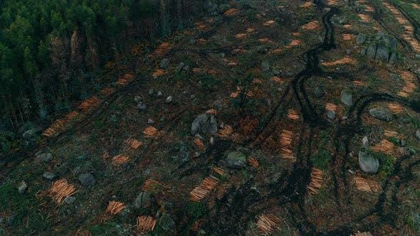 Cover Image for Deforestation Aerial