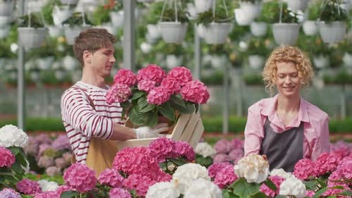 Portrait Couple Workers Who Work Together in a Flower Center Collect for Sale Purple Hydrangea