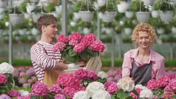 Portrait Paar Arbeiter, die in einem Blumenzentrum zusammenarbeiten, sammeln zum Verkauf Lila Hortensie