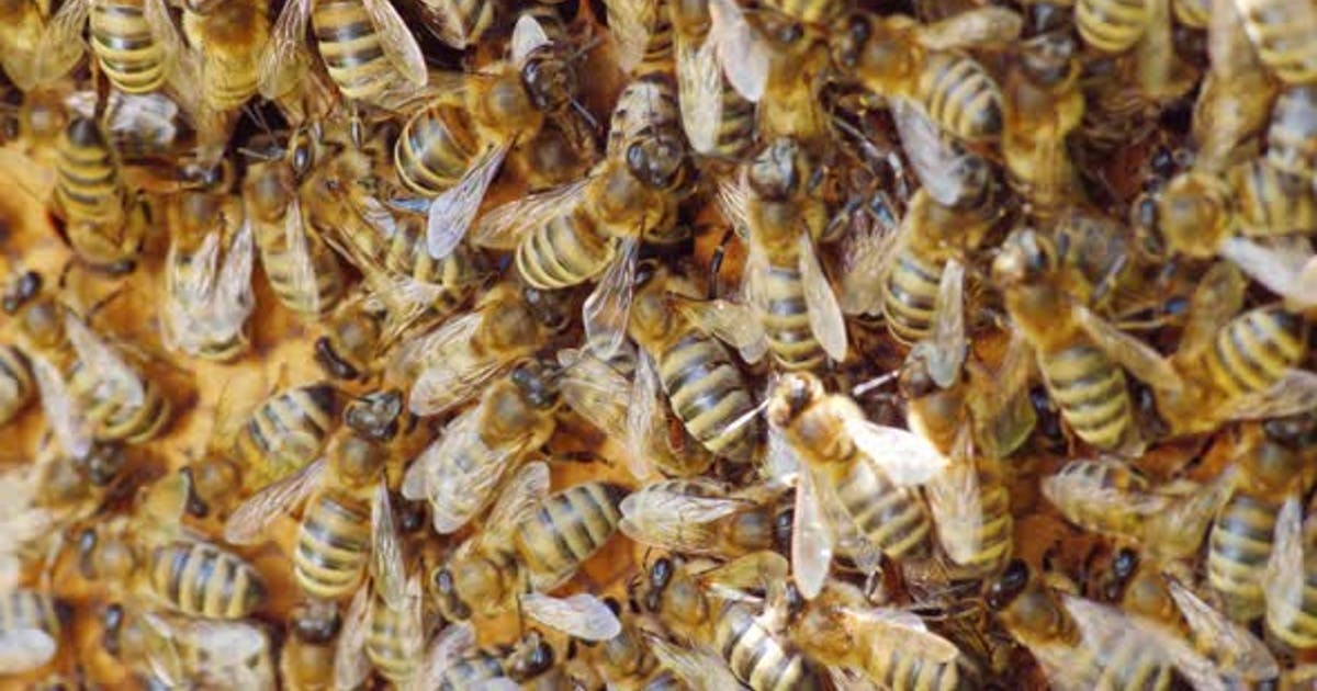 The Bees Are Working Inside the Hive. Useful Food and Traditional Medicine. Macro Shot