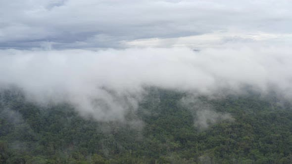 Aerial view of tropical forest in the Amazon of Ecuador