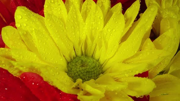 Thumbnail for Close up view of colorful flowers as they rotate