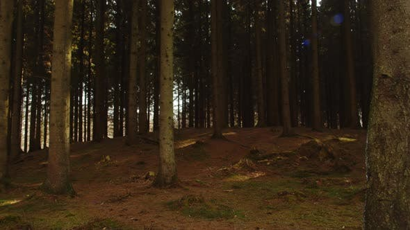 Thumbnail for Panoramic View of the Forest