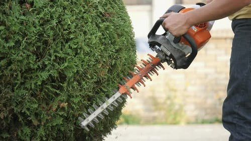 Gas hedge trimmer at work