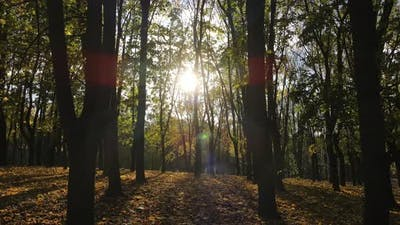 The Sun's Rays Break Through The Branches Of Trees