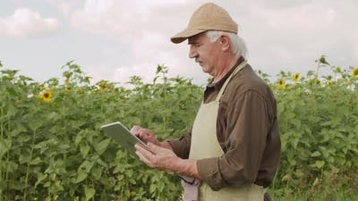 Senior Agronomist With Tablet In Rural Field