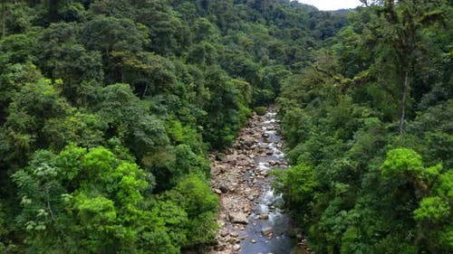 Aerial view of a beautiful river running through a tropical forest