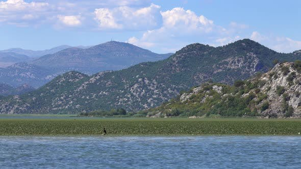 Cover Image for Birds on the Famous Lake Skadar in Montenegro