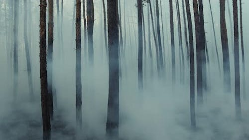 Dark Mysterious Burned Forest Landscape, Smoke Rising From Ground After Wildfire.