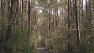 Vertical Video of a Road in the Forest Slow Motion