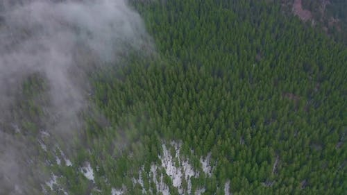 Aerial View of Amazing Green Valley. Drone Flying Above the Forest and Fog.