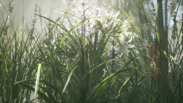 Thumbnail for Grass Flower Field with Soft Sunlight for Background.
