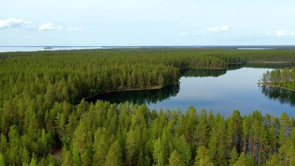 Cover Image for Lake and Forest in Finland