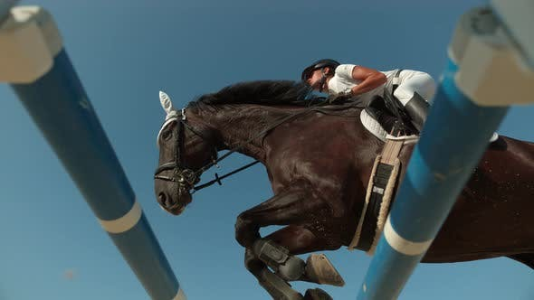 Thumbnail for Horse leaping, Ultra Slow Motion