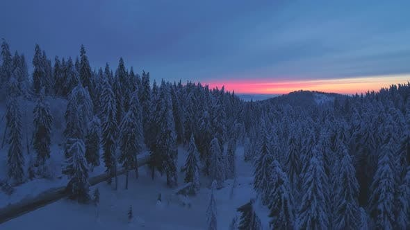 Thumbnail for Aerial drone view of sunset snow covered forest trees and sunrise