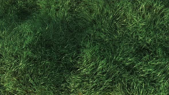 Thumbnail for Grass Fast Blowing in the Wind 4K