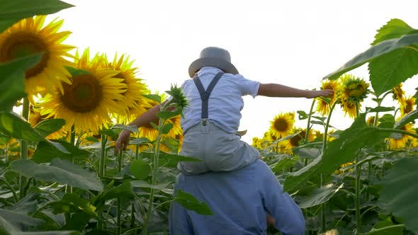 Happy Childhood, Kid Raises Hands Imitating Flight on Sunflower Field