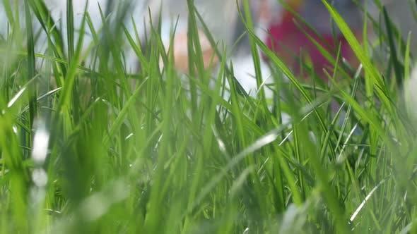 Thumbnail for Green Summer Grass