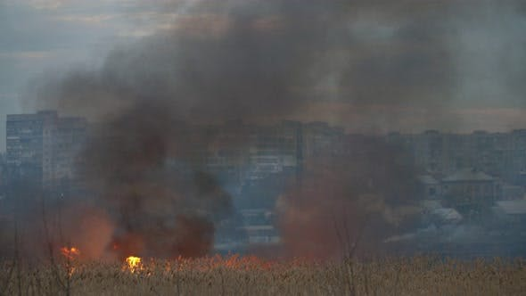 Thumbnail for Glowing Marsh with Forks of a Blaze on the Dnipro Bank in the Evening in Spring