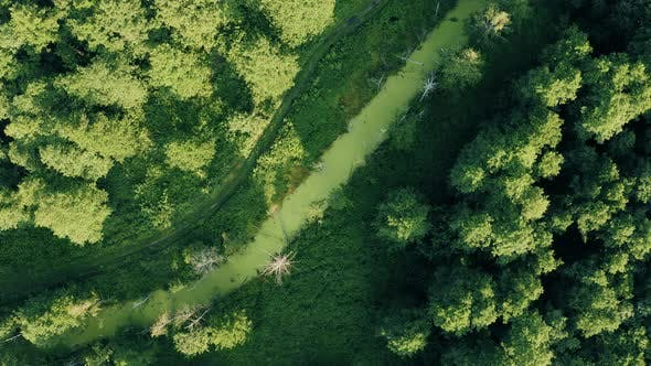 Aerial View Of Green Forest Landscape. Top View From High Attitude In Summer Evening. Small Marsh
