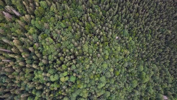 Dense deciduous fresh green forest in summer day - top down view