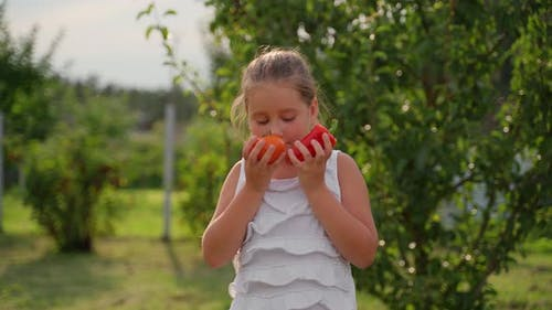Portrait young girl with harvest vegetables in garden. Cute little child smile sniffing a tomato