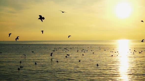 Thumbnail for Seagulls Over Sea