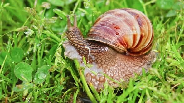 Snail(4K)