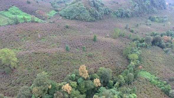 Thumbnail for Aerial Fly Over Hazelnut Trees