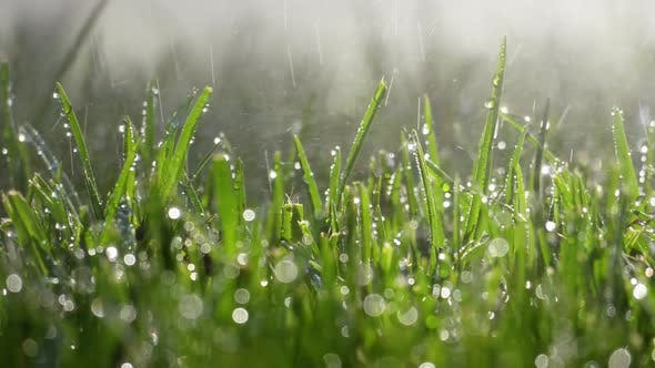 Thumbnail for Fresh Watered Grass