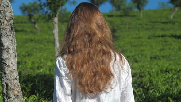 Thumbnail for Long Haired Girl Walks at Tea Bushes Slow Motion Closeup