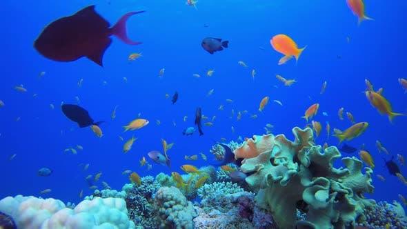Unterwasser-buntes Riff
