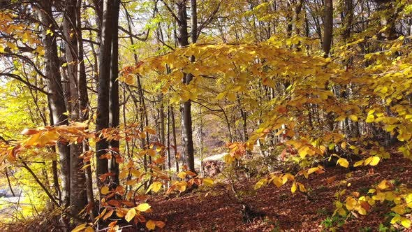 Cinematic Yellow Dry Leaves in Natural Autumn Forest