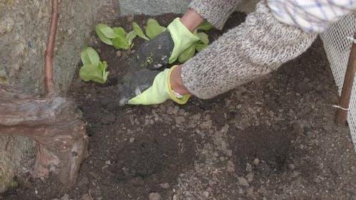 Farming Vegetable Home Garden Cultivation