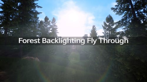 Forest Backlighting Fly Through