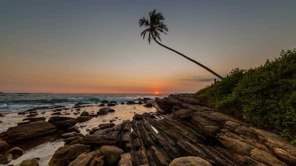 Thumbnail for Sunrise on a Beach with Palm Tree Sri Lanka