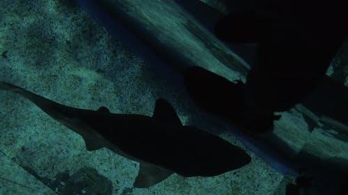 Glass floor and swimming small shark in ocenanarium