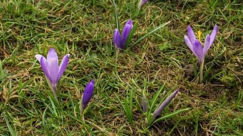 Snowing in Spring Meadow Flowers