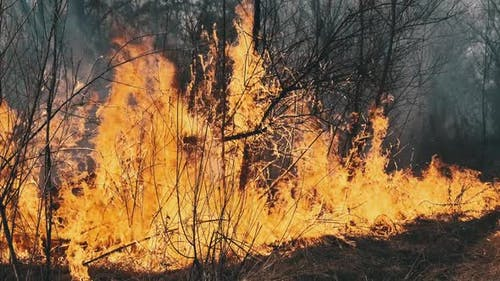 Fire in the Forest Burning Dry Grass Trees Bushes Flame and Smoke Wildfires