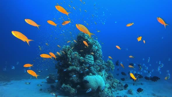 Cover Image for Underwater Marine Tropical Life