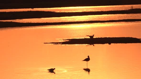 Thumbnail for Reflection of the Sunset on the Water Surface with Birds on the Sand.
