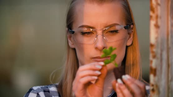 Close Up of Scientist or Researcher Looking at Young Plant and Examining Plant