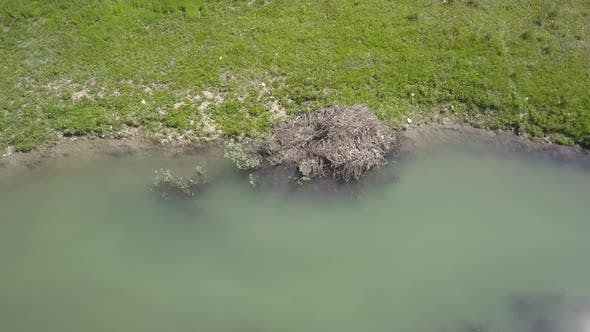 Thumbnail for Aerial of Beaver Lodge Home Den House Sticks in Pond in Summer