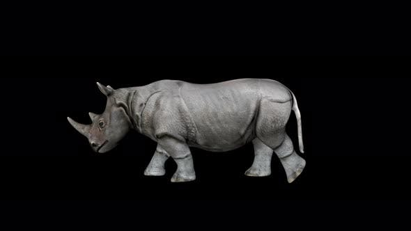 Cover Image for 4K Rhino Walking