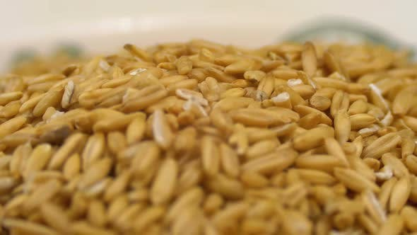 Thumbnail for Grains of Raw Oat Groats Rotate on a White Plate Close-up