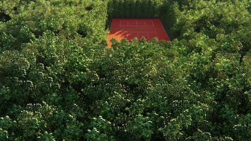 Tennis Court In The Forest