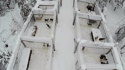 Aerial view of dogs in cages on winter day